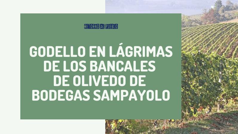 Godello en lágrimas de los Bancales de Olivedo de Bodegas Sampayolo